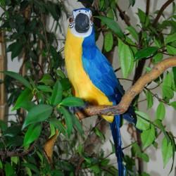 Perroquet - Cacatoes bleu, H. 60 cm
