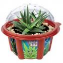 Jardiner - Mon Aloe Vera, L. 15 cm