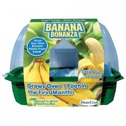 Jardiner - Serre à Bananes