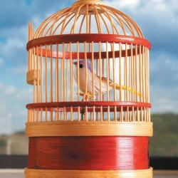 Boite à Musique - Cage, Petit Oiseau Chanteur, H. 17cm